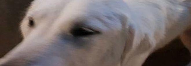 Il cane Olivia