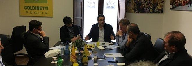 Xylella, un milione di euro per indennizzare gli olivicoltori danneggiati