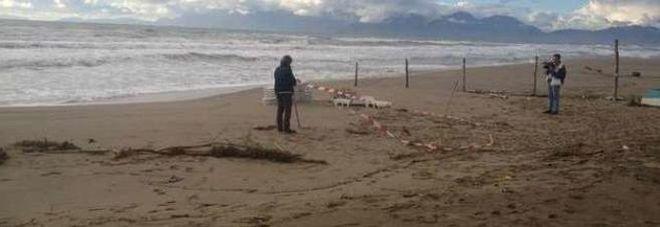 Neonata morta in spiaggia, la madre 23enne: «Non sapevo come fare»